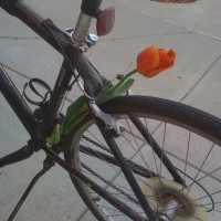Discovered a flower tucked into my bike upon leaving work. #random